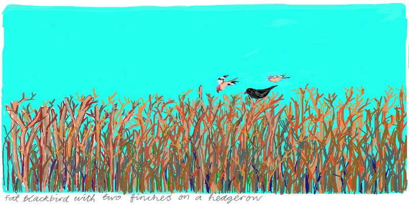 Fat blackbird and two finches – Copy